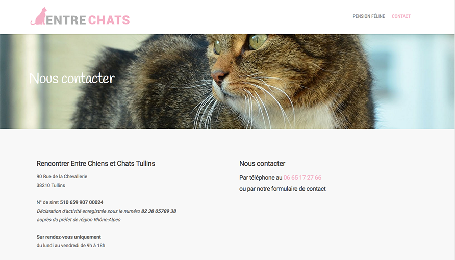 entre-chats-contact-site